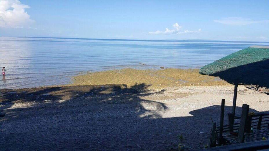 meachel.com-beach-property-for-sale-catmon-cebu
