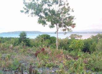 meachel.com-beach-lot-for-sale-moalboal-cebu