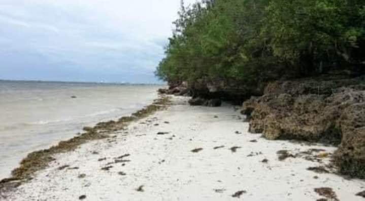 Beachfront Property in Panglao, Bohol