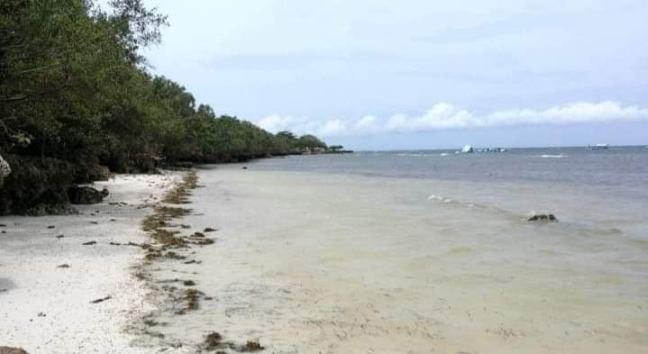 forsale-beachfront-lot-meachel-com-panglao-bohol-november-2020