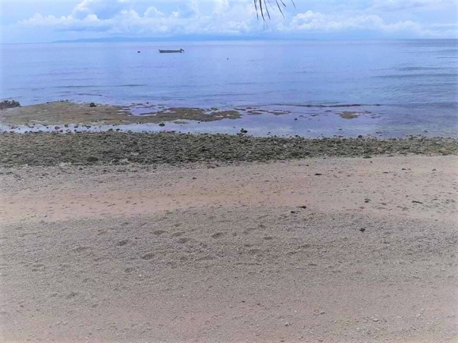 meachel-com-cebu-lot-only-for-sale-beach-front-property-oslob-2021-january-img4